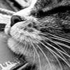 safoelj: (черно-белый кот)