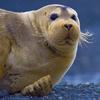 sunnymodffa: (Flabbergasted Seal)