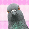 sunnymodffa: (Coo! Coo! (staring pigeon))