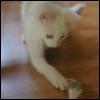 auros: (Curious Kitten)