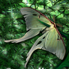 halloranelder: (Changeling Moth)