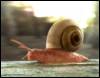 arliss: (red snail)