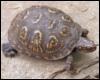 arliss: (turtle)