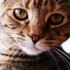 withherhands: (Peanut Butter Kitty Time)