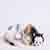 ionyx_halostar: (Sleepy Kitten)