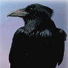 moniquill: (crow)