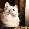 peluche: (cat_white)