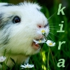theearth: Kira-mod's icon (I will eat your daisies)