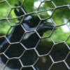epsilon_pegasi: (bird:cage:sombre)