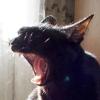 kosta_kosta: (кот рычит)