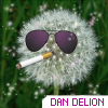 rockindandelion: (DanDeLion)