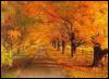 t_ramisy: (осень наступила)