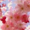 csmccreary: (japan)