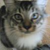 healingmirth: young cat looking up at camera (damn cat)