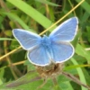 jennygordon: (Blue Butterfly)