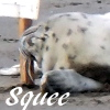 ariestess: NOT FOR PUBLIC SHARING (harbor seal pup squee)