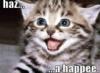 actionreplay: (happy kitty)