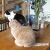 actionreplay: (tandem cats)