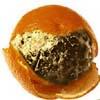 churkan: (Мандаринка, мандаринка)