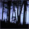 teylaminh: (Random - Trees)