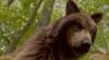psychowolf: wolfforest (wolfforest)