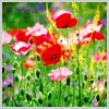 vipersunjoy: (flowers)