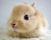 fluffinator: A bunny (A bunny)