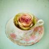 tuberose: (lovely tea.)