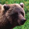 vitus_wagner: (bear)