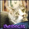 ext_85699: (shelbecat)