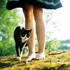 ojacie: ([animals] going somewhere?)