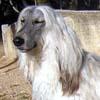 monigo: (Alf)