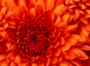 mitakay: flower (pic#788471)