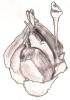 lyonesse: (aht, garlic)