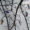 iridaceaena: (glass tree)