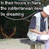 iridaceaena: (Nara)