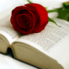 beth_shulman: (stock: open book rose)