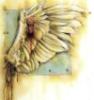 seraphim_grace: (angel wings)