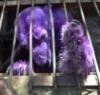 piemancer: (Bear In Cage)