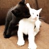 rootsofthestories: A black cat nuzzling a white cat (misc: cats love)