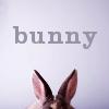 illusen: bunny ears (bunny ears)