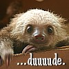 "genarti: Baby sloth looking over edge of cardboard box, with text ""...duuuude."" ([misc] duuuuuude)"