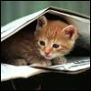 genarti: Small orange kitten hiding under open newspaper. ([misc] cut the world down to size)