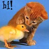 genarti: Small orange kitten putting an exploratory paw on an even tinier duckling's head. ([misc] hi!)