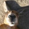 dziga: (kangoo_cute)