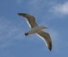 othersideofwind: (gull)