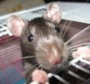 erelenn: (Крыс)