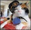 ruwell_marianne: (railcat)