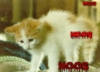 ruwell_marianne: (scared cat)