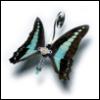 fandaal: (butterfly)